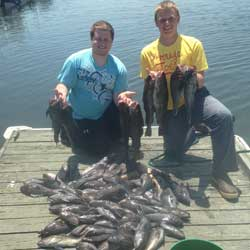 60 Barnegat Light Sea Bass In The Box