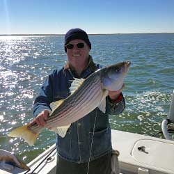 3 Nice 28 Inch LBI Striped Bass