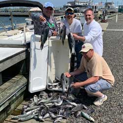 60 Sea Bass And 23 Blues In The BoxAn Easy Sea Bass Limit Trip