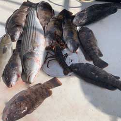 9 Keeper Tog A Cod Striper &Lobster In The Box