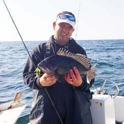LBI Sea Bass Trip Puts 60 In The Box