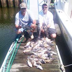 Serious LBI Fishermen Reel In 60 Sea Bass