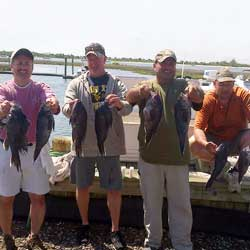 Successful LBI Wreck Fishing Day