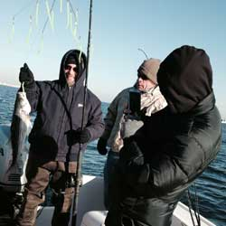7 Blackfish Boated On LBI Opening Day36 Inch Striped Bass Boated At Barnegat Light