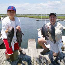 WOW 73 Sea Bass Boated Off LBI